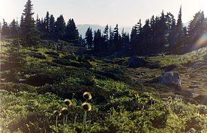 Alpine meadow at Paradise, Mount Rainier, Wash...