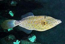 Jogos de colorir são o melhor jogo para crianças! Lista de peixes da Ilha de Páscoa – Wikipédia, a