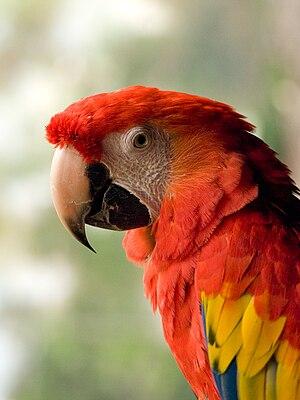 Animales en el Parque de la Naturaleza Faunia,...