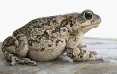 Image result for toad