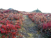 Zu Beginn ist der Arctic Circle Trail noch sehr flach.