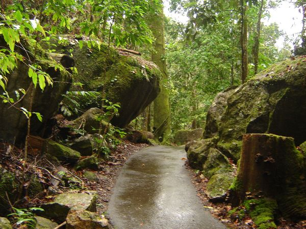 Queensland tropical rain forests Wikipedia