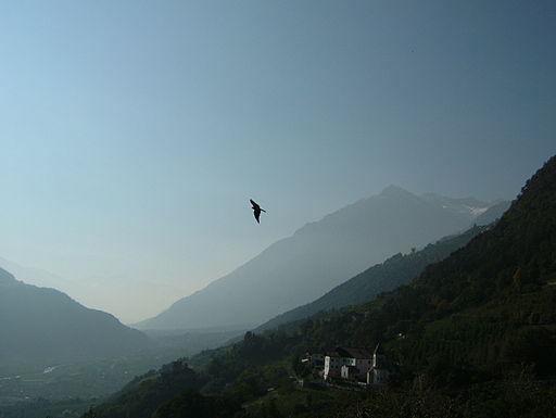 2005 10 bird of prey greifvogel 02790