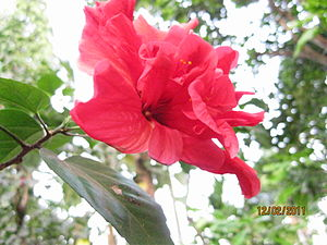 English: flower