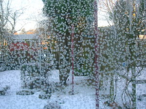 English: Jack Frost on double-glazed windows, ...
