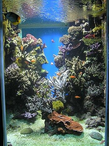 Reef aquarium in Monaco