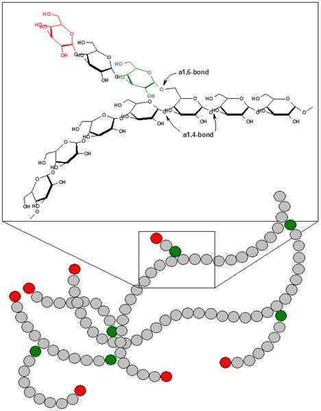 Glycogen structure