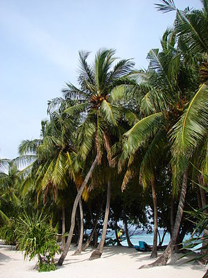 Photographs from Maldives