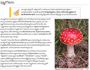 English: Screen of Mushroom page on Telugu tra...