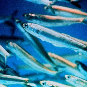 Vitamin D and Fish Oil: More Good Reasons To Supplement