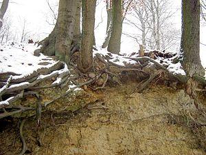 Geschiebemergel-Brohmer-Berge-08-01-2010-39
