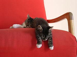 2 kittens taking a nap