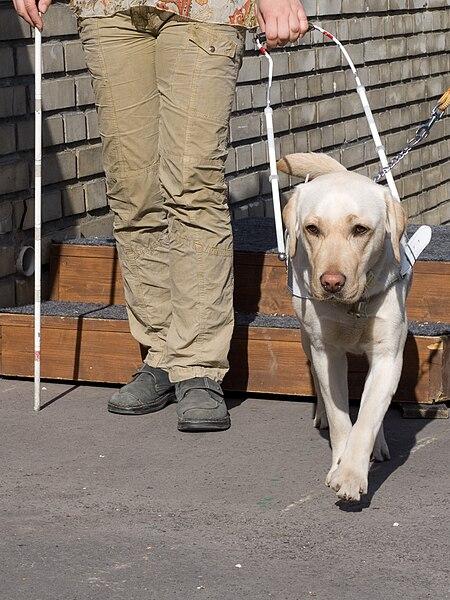 File:SVVP Klikatá, pes scházející schody.jpg