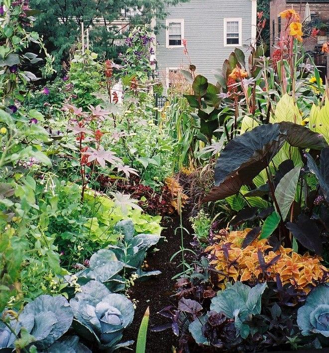 https://i1.wp.com/upload.wikimedia.org/wikipedia/commons/thumb/1/11/Vegetables_and_ornamental_plants_in_SELROSLT%27s_Rutland-Washington_Garden.jpg/839px-Vegetables_and_ornamental_plants_in_SELROSLT%27s_Rutland-Washington_Garden.jpg?resize=661%2C709&ssl=1