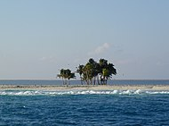 Palmeras en Isla Clipperton