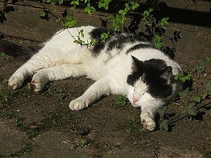 Lazy Cat at Tum Bur in Hattingen Ruhr
