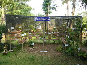 A garden growing medicinal herbs of Na Wa Publ...