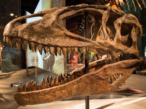 Ultimate Dinosaurs Carcharodontosaurus.jpg