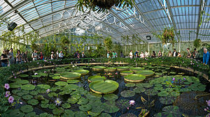 English: A wide panoramic view of the Waterlil...