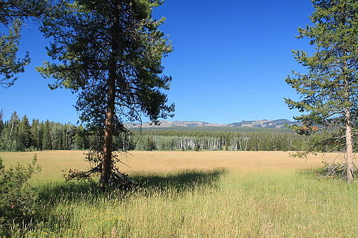 Beautiful Meadow in Yellowstone National Park