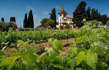 Tempranillo vines, Clos la Plana vinyard, Pene...