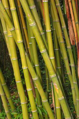 cerita tentang bambu sebagai material bangunan