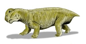 Lystrosaurus murrayi, a dicynodont from the Ea...