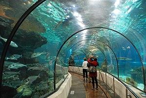 Nederlands: De tunnel van het aquarium te Barc...