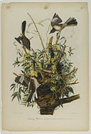 Brooklyn Museum - Mocking Bird - John J. Audubon