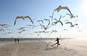 "English: ""Running with the seagulls""..."
