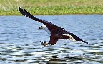 A Bird's-Eye View of Fishing (3/6)