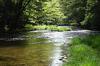 Mead Run in the Allegheny National Forest.