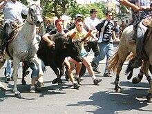 Running Of The Bulls Wikipedia