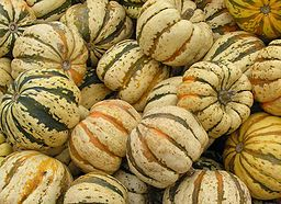 Cucurbita pepo acorn group Home Kitchen Garden Carnival Squash