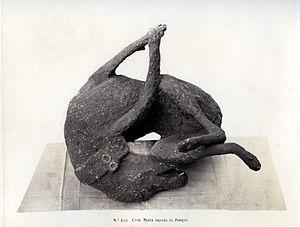 """Roberto Rive (18?-1889), """"# 493. A dead d..."""