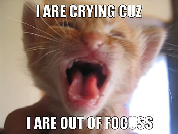 English: Lolcat from :Image:Cat crying.jpg Tex...