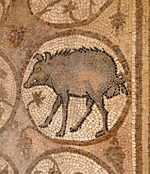 English: Mosaic of a wild boar on the Northern...