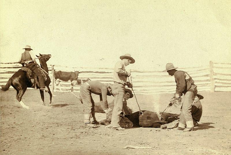 Archivo:Cattle branding (Grabill 1888).jpg