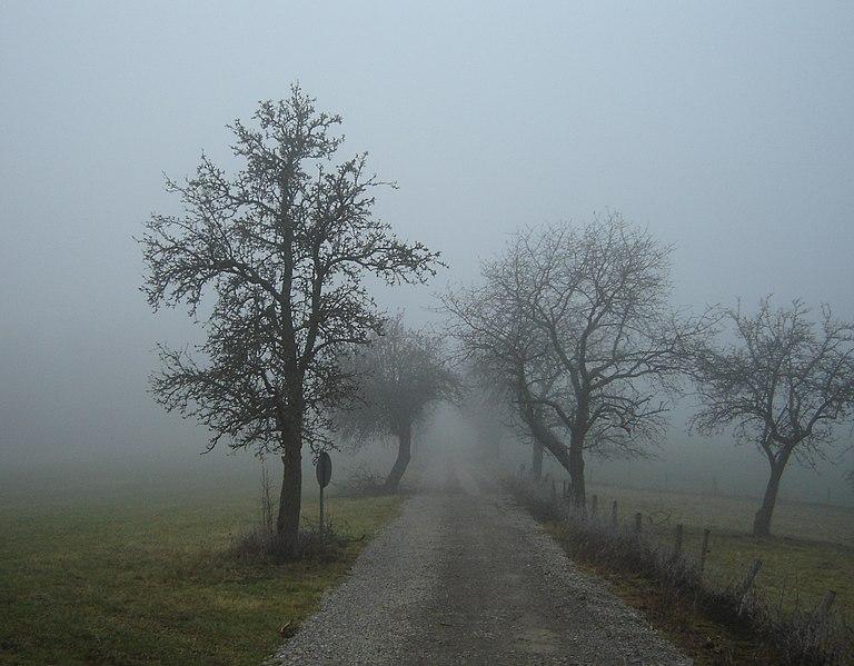 File:Nebel in der Region Rhön 01386.jpg