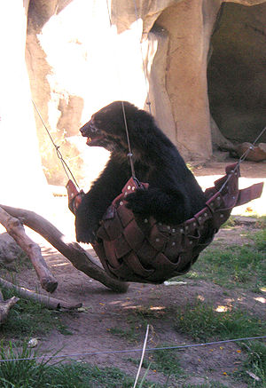 A bear in a Hammock at the Buenos Aires zoo.