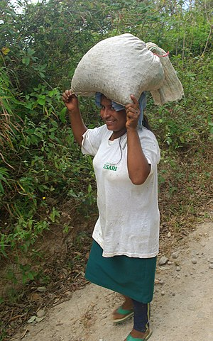 Fair trade Coffee growers in Tacuba in the Par...