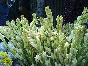 Polianthes tuberosa. Dijual 5000 per ikat.