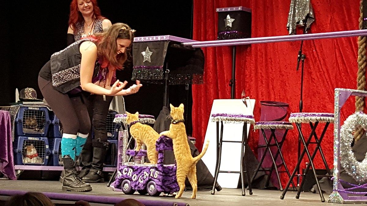 The Amazing Acro Cats Wikipedia