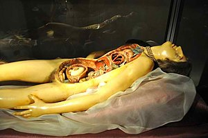 "The ""Venerina"" of Clemente Susini (anatomical ..."