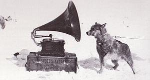 English: One of the sled dogs listening to mus...