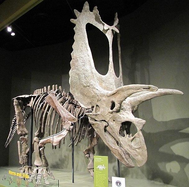 File:Titanoceratops.jpg