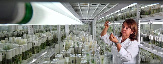 A photograph: a woman in a lab coat looks at a sample tube. She is in a long room completely filled with trays of glass sample tubes.