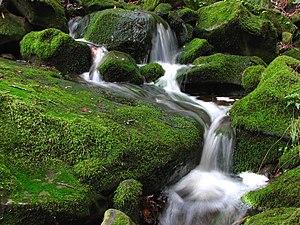 A small cascade in the Las Trampas Regional Wi...