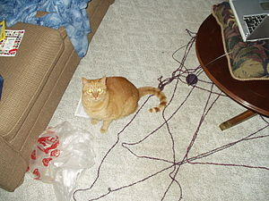 Puck making a mess with a ball of yarn