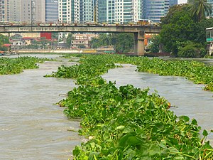 Vegetation on the River Pasig